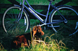 a dog and a bicycle resting in Devon by a country five bar gate