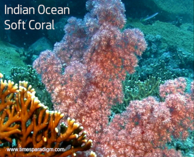 flowers and some soft corals look surprisingly similar.