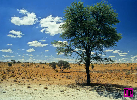 A desert landscape in the Kalahari, Botswana.