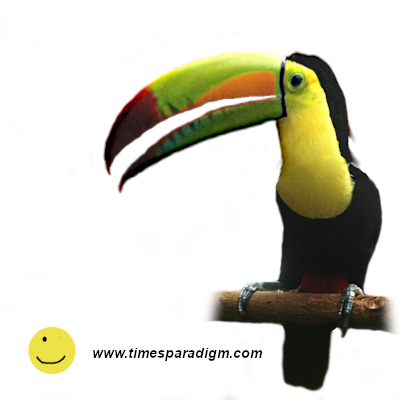 identical toucan photo, now with bill open